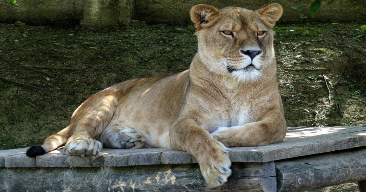 Зоопарк и Динопарк