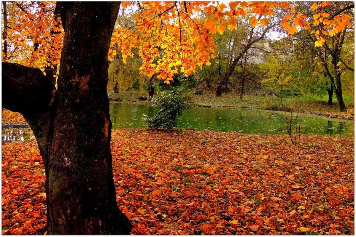 Барчанский парк